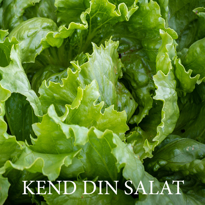 Næringsindhold i salat